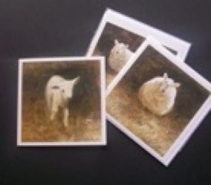 lamb-cards-christine-porter