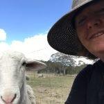 cp-random-sheep
