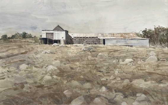Watercolour painting by Christine Porter. Showing the exterior of a timber shearing shed. With slab timber and corrugated iron walls in sunlight and corrugated iron roof. Also rocks in foreground.