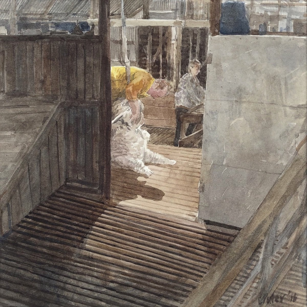 Watercolour painting by Christine Porter showing a shearer in a yellow shirt shearing a ewe as viewed from the pens behind him. In the distance in the woolroom, a woman is classing wool at a wooltable