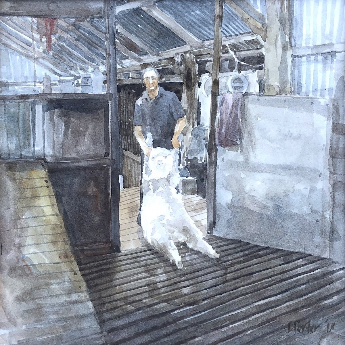 Watercolour painting by Christine Porter showing a shearer dragging a sheep from the pens behind his stand into his place on the board.