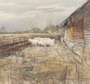 Watercolour painting by Christine Porter showing a small mob of shorn sheep in a pen outside a shearing shed. The yards are made of red steel. The shearing shed is corrugated iron.
