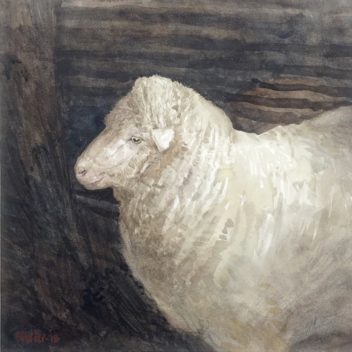 Watercolour painting by Christine Porter showing a woolly ere standing in a dark shed looking pensive.