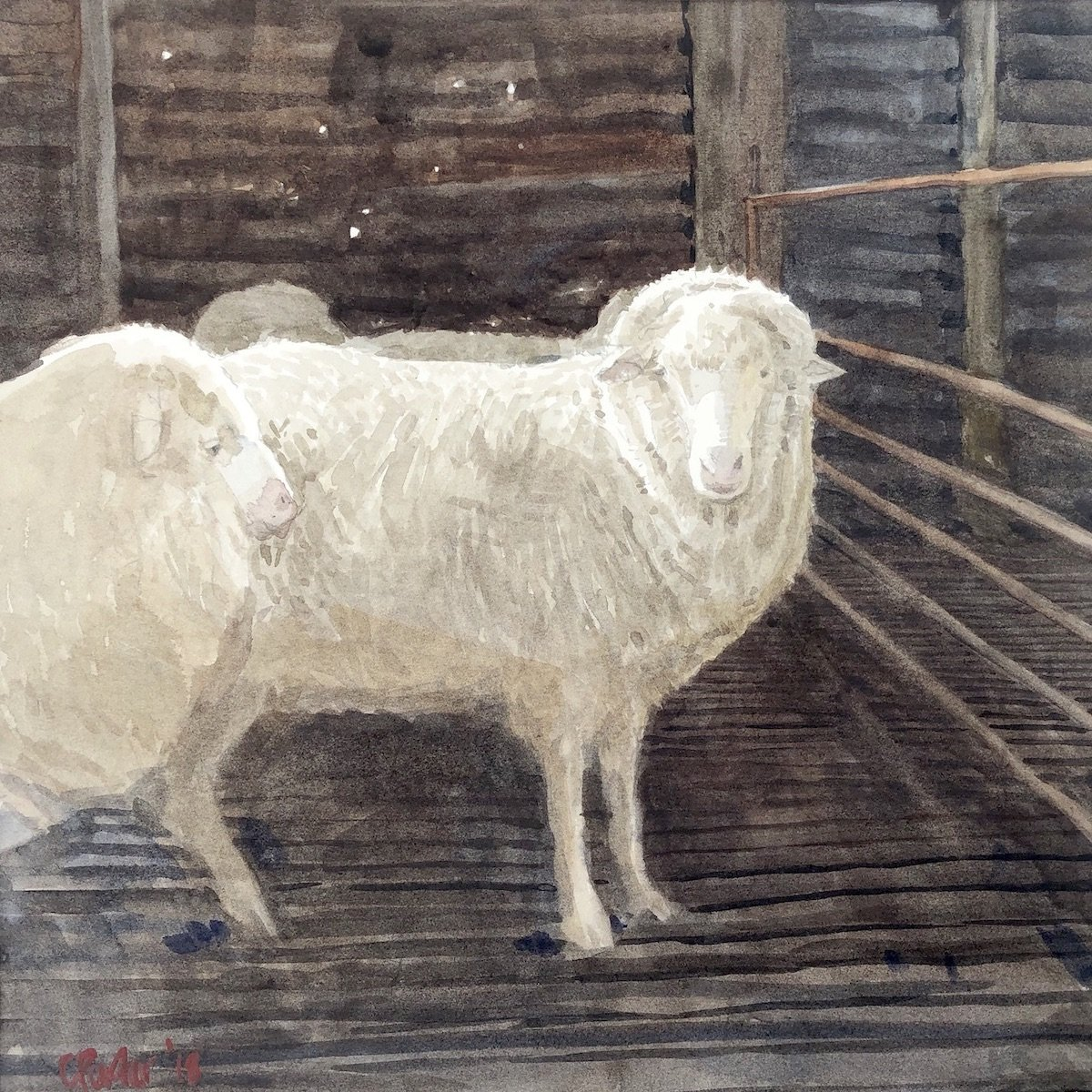 Watercolour painting by Christine Porter showing two woolly ewes in a dark shed. One is looking forwards, the other staring at the audience.
