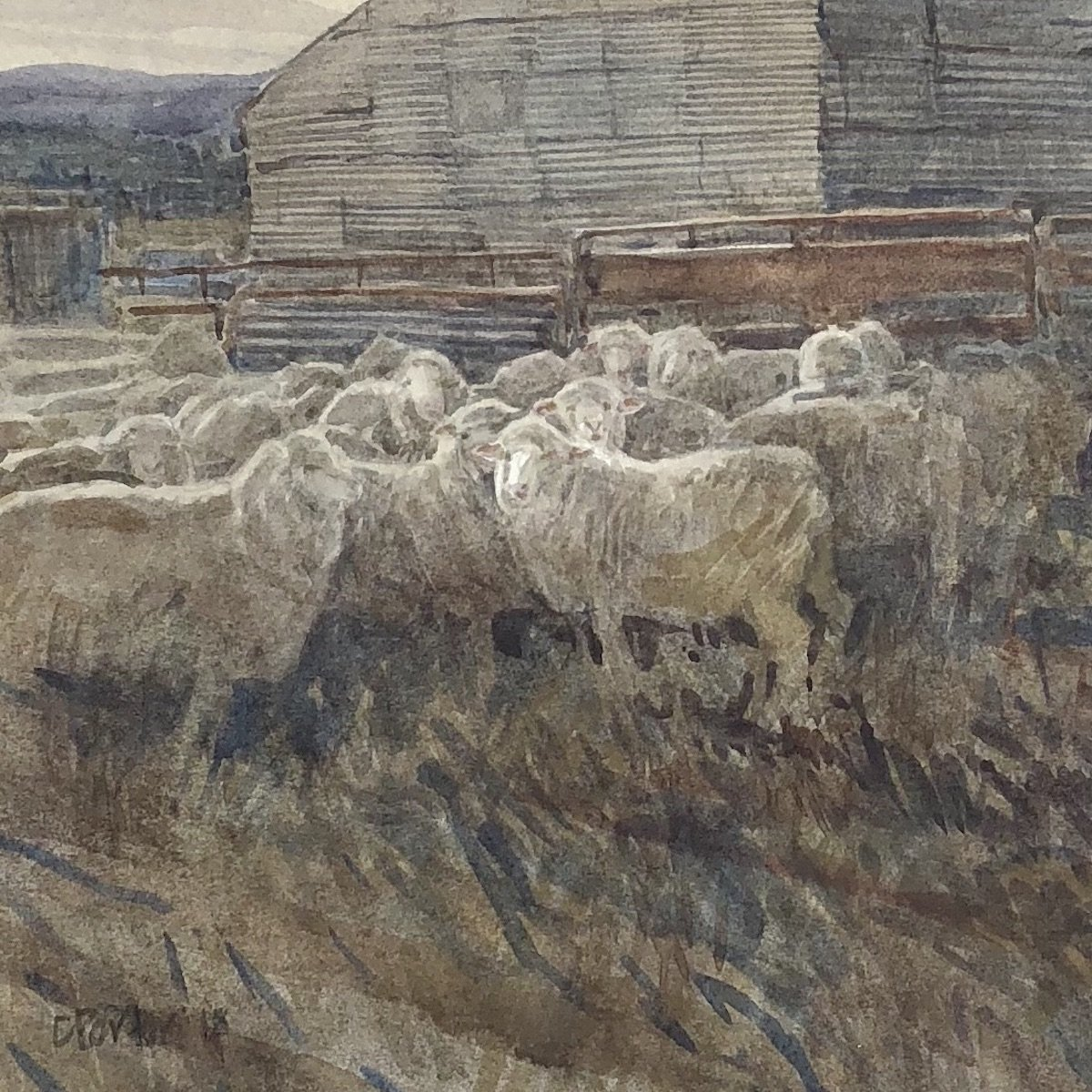 Watercolour painting by Christine Porter showing a mob of woolly ewes yarded up in some red metal years in front of a corrugated iron shed. It's dusk.