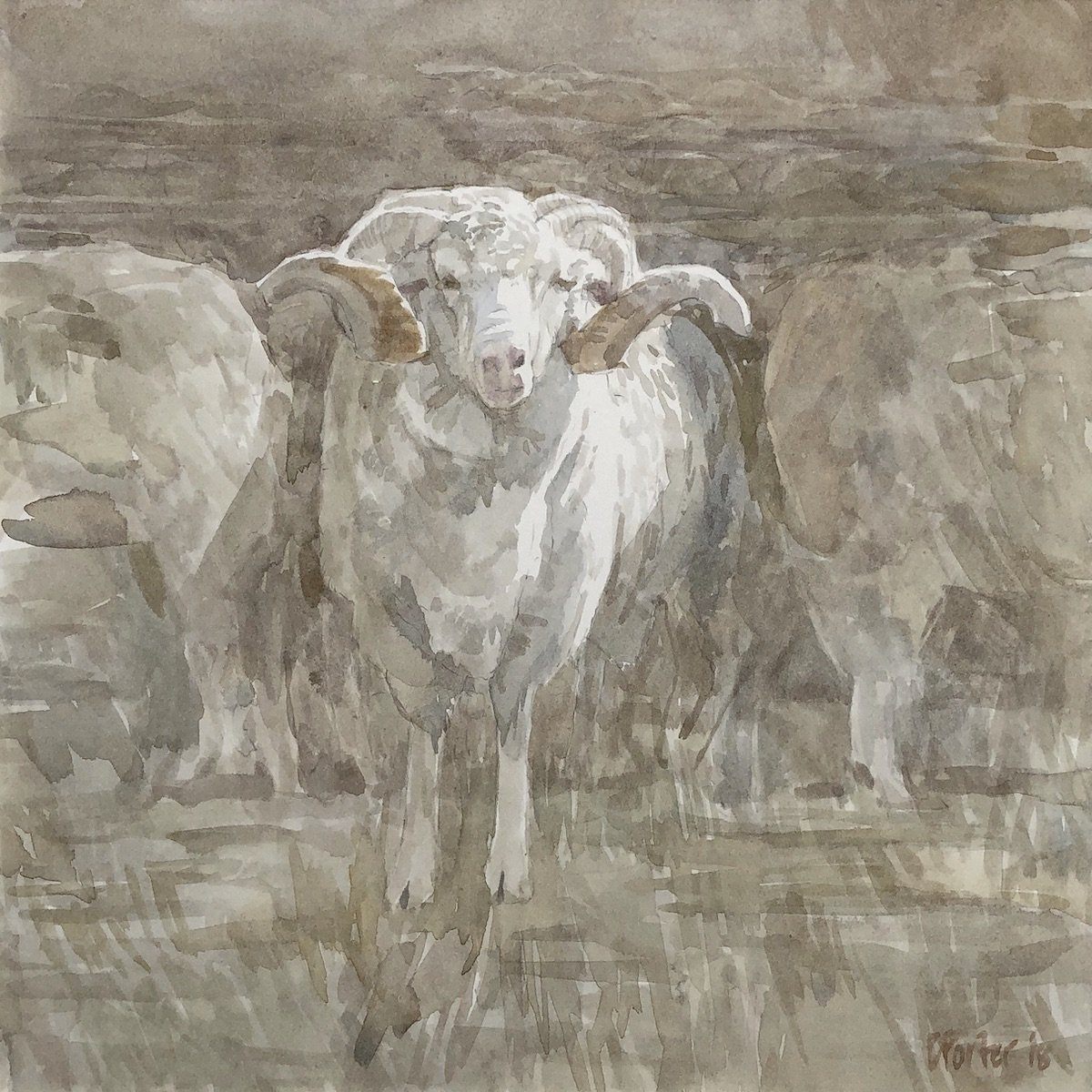 Watercolour painting by Christine Porter showing a single woolly horned Merino ram. in a crowd but the others are not visible.