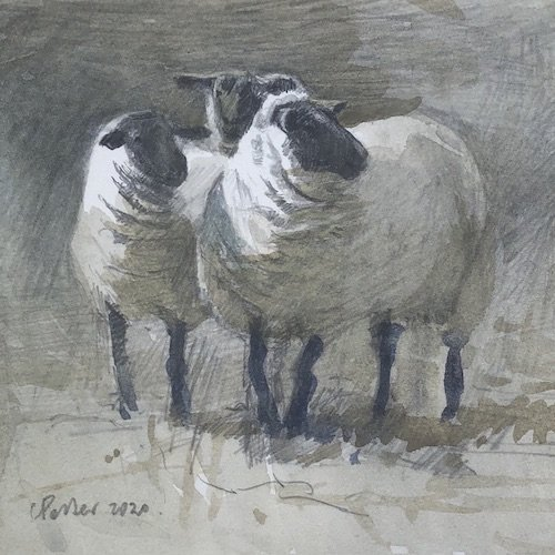 Watercolour painting by Christine Porter showing a three suffolk sheep looking off to one side