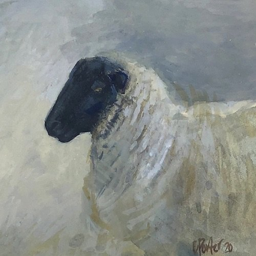 Watercolour painting by Christine Porter showing a a head of a Suffolk ewe