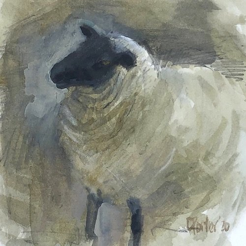 Watercolour painting by Christine Porter showing a Suffolk sheep, with its head to one side, appearing to be listening.
