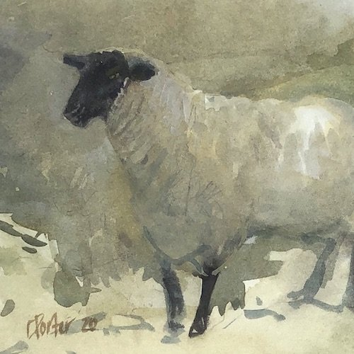 Watercolour painting by Christine Porter showing a Suffolk sheep, walking towards the viewer, coming out of the shadow.