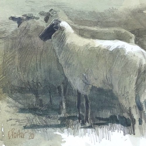 Watercolour painting by Christine Porter showing a Suffolk sheep, walking away. It's in a crowd with two or three others except you can only see their heads, and they're in shade. .