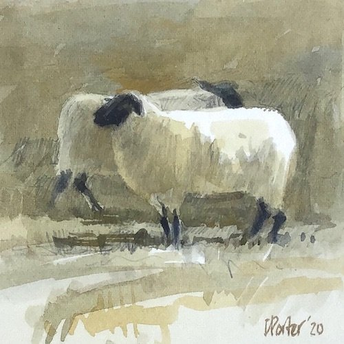 Watercolour painting by Christine Porter showing a Suffolk sheep, with another suffolk sheep behind it, walking in the other direction