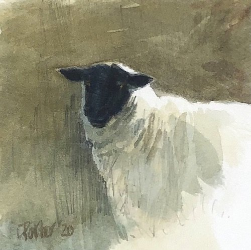 Watercolour painting by Christine Porter showing a Suffolk sheep, a young looking ewe, looking out of the picture straight at the viewer. though the eyes are a bit hidden.