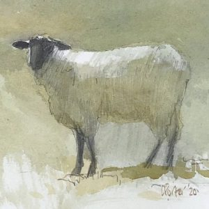 Watercolour painting by Christine Porter showing asuffolk ewe facing the audience
