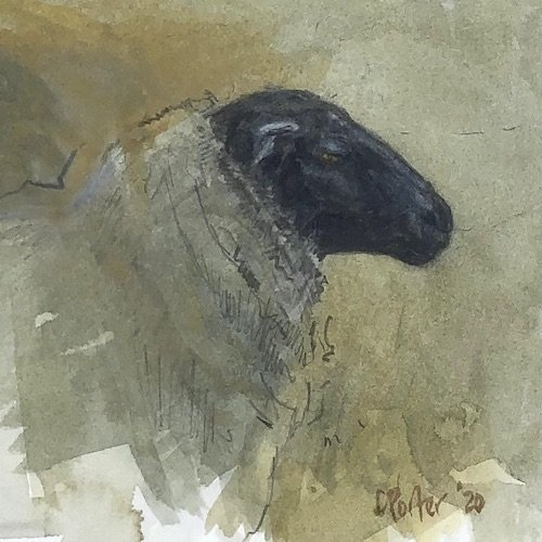 Watercolour painting by Christine Porter showing a Suffolk sheep, sideon. with the white wool appearing grey and it's patrician nose in evidence