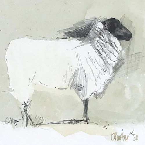 Watercolour painting by Christine Porter showing a Suffolk sheep, sideon. This is more of a pencil drawing with wash than a painting. There is a lot of detial around the head and neck. It's standing tall like it's in a competition.